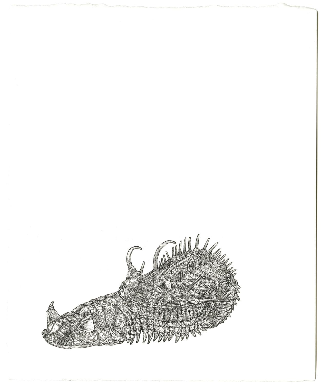 trilobiteslarge2